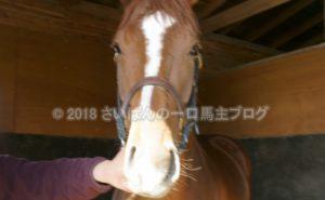 [アランブレラ] 3歳4月 北海道牧場見学 徐々にウォーキングマシンへ 1