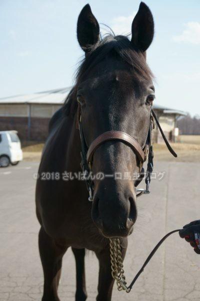 [ヴァイトブリック] 2歳4月 北海道牧場見学 ダートらしい力強さというよりは、芝向きの軽さも十分備えている