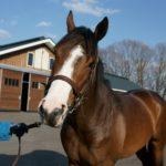 [シェドゥーヴル] 2歳4月 北海道牧場見学 文句のつけようがないです 11