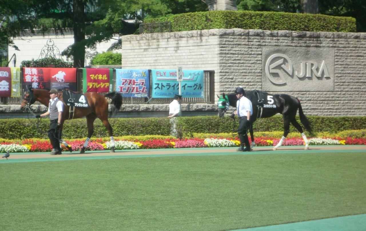 [ストライクイーグル] 4歳5月 13戦目 是政特別!東京競馬場で現地応援! 5