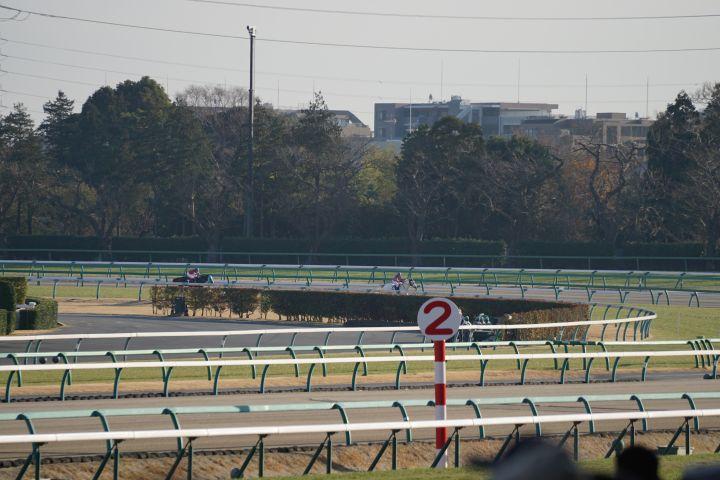 [競馬観戦] 中山競馬場 アツすぎた中山大障害最後の直線 11