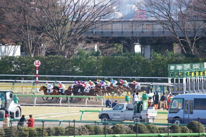 [競馬観戦] 東京新聞杯の東京競馬場に行ってきました 11