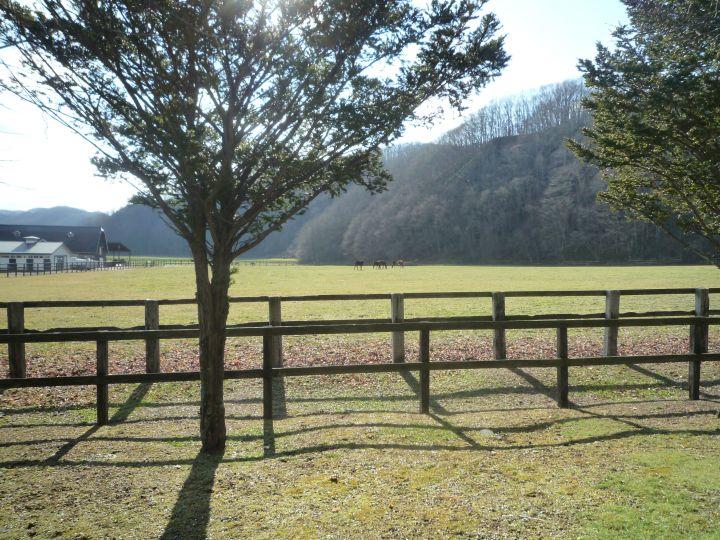 [牧場見学] 北海道2日目 メインは社台スタリオンステーションとノーザンファーム早来牧場見学 4