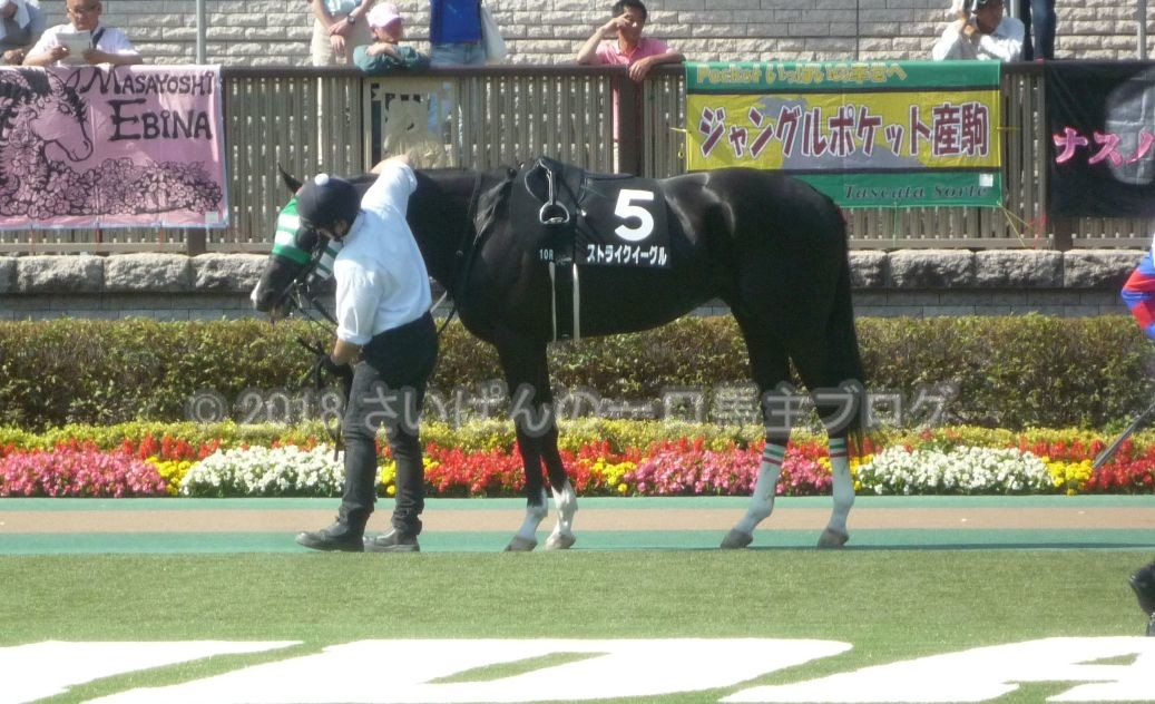 [ストライクイーグル] 4歳5月 13戦目 是政特別!東京競馬場で現地応援! 7