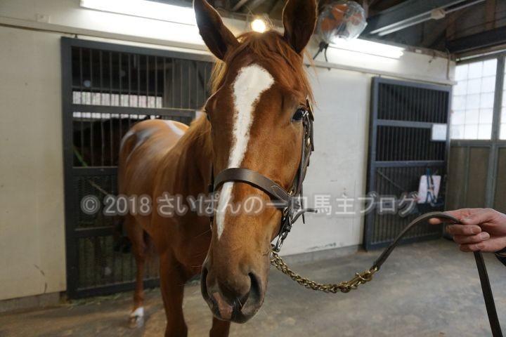 [アランブレラ] 3歳11月 大井競馬(サフラン賞・ダ1700)に御神本騎手で出走いたします 25