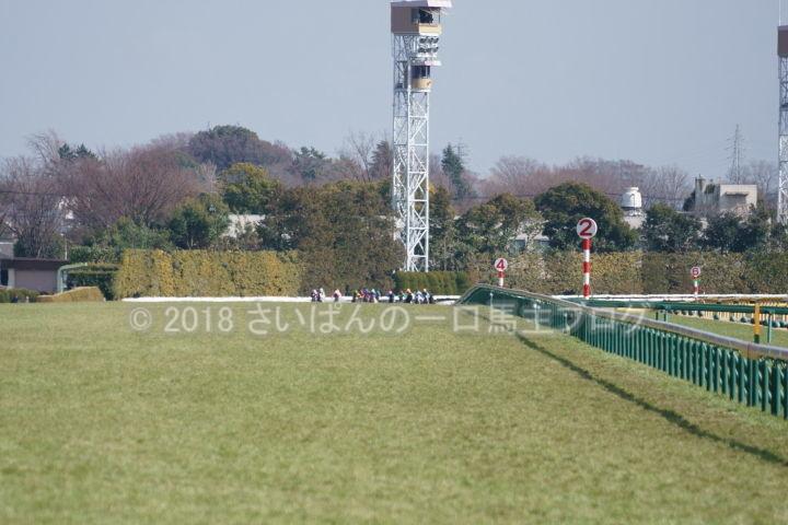 [競馬観戦] 東京新聞杯の東京競馬場に行ってきました 1