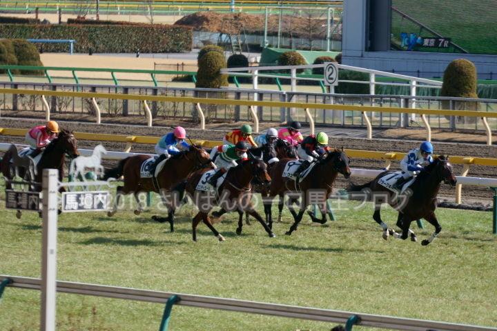 [競馬観戦] 東京新聞杯の東京競馬場に行ってきました 9