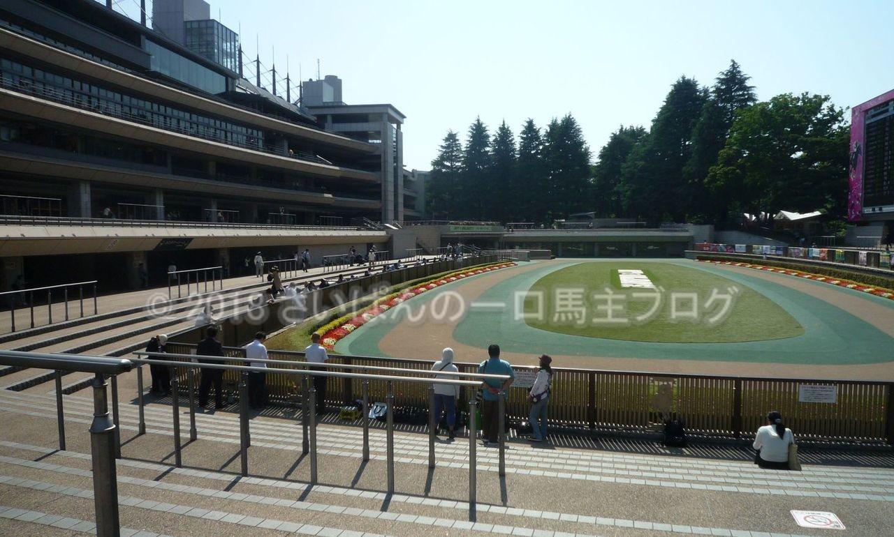 [ストライクイーグル] 4歳5月 13戦目 是政特別!東京競馬場で現地応援! 2
