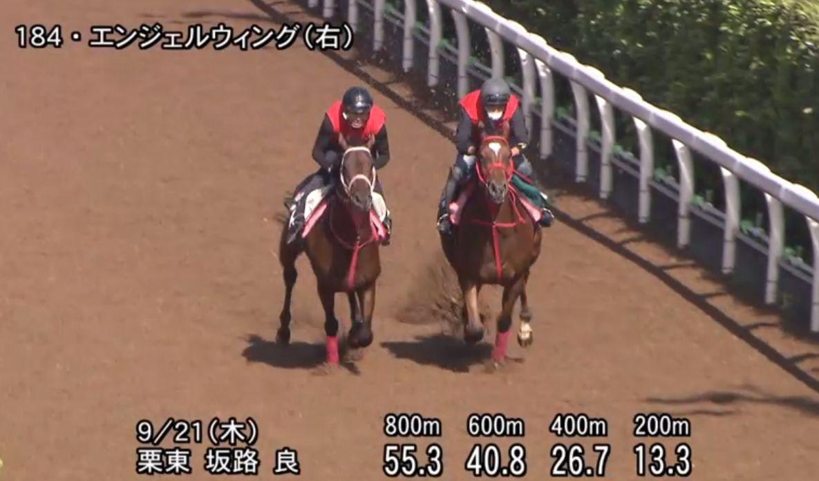 [エンジェルウィング] 2歳9月 デビュー戦は明日の阪神6Rダート1400福永騎手鞍上で2枠4番! 1