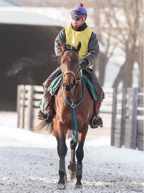 [フローリッドコートの14] 2歳1月 + 馬名応募 3