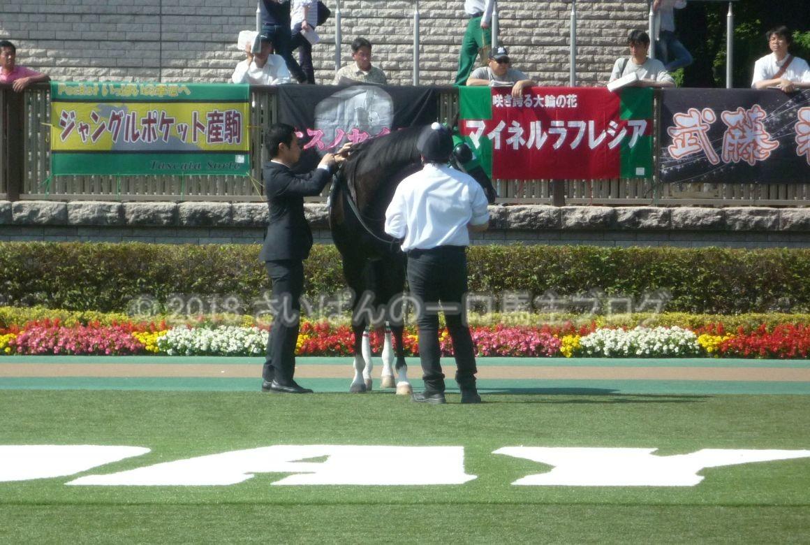 [ストライクイーグル] 4歳5月 13戦目 是政特別!東京競馬場で現地応援! 6