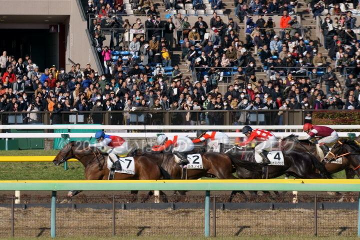[競馬観戦] 東京新聞杯の東京競馬場に行ってきました 12
