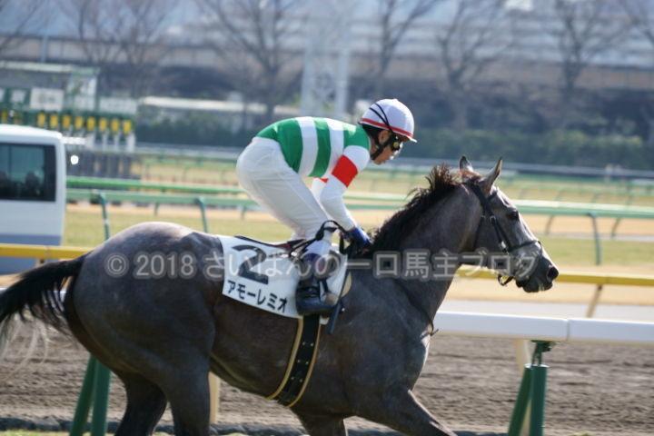 [競馬観戦] 東京新聞杯の東京競馬場に行ってきました 2