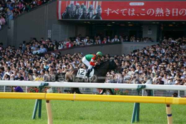 [競馬観戦] 日本ダービー当日の東京競馬場・内馬場からの風景 20