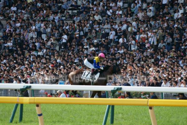 [競馬観戦] 日本ダービー当日の東京競馬場・内馬場からの風景 21