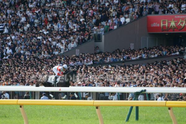 [競馬観戦] 日本ダービー当日の東京競馬場・内馬場からの風景 22
