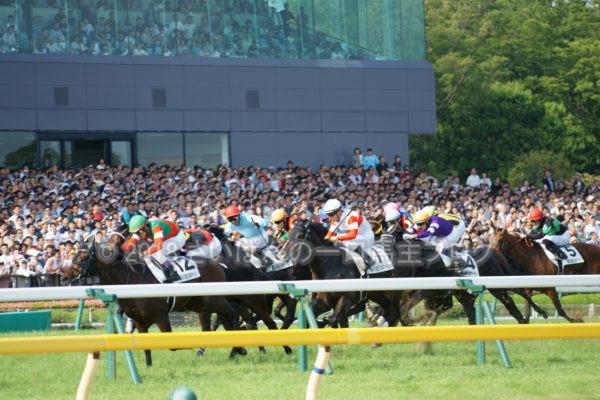 [競馬観戦] 日本ダービー当日の東京競馬場・内馬場からの風景 30
