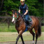 [シェドゥーヴル] 2歳6月 木村哲也厩舎へ入厩しました!ゲート試験の合格を目指していきます 3