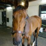 [キアレッツァ] 2歳7月 天栄見学~競馬を使って良くなっている 8