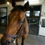 [キアレッツァ] 2歳11月 基本的には操縦性が良くて楽しみを持てる馬だが、3戦目の競馬は精神状態がカギ 7