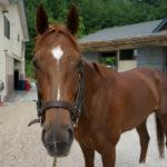 [チャームクォーク] 4歳7月 天栄牧場見学~地方交流を視野に帰厩 31