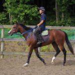 [シェドゥーヴル] 2歳8月 新馬戦でもそれなりの走りをしてくれるのではと期待を持っています 9