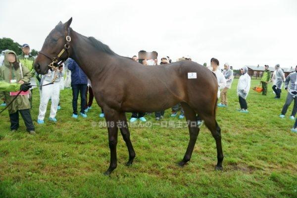 [出資検討] キャロット2018年度募集馬見学ツアー写真 ノーザンファームY11&12 (関東牝馬) 1