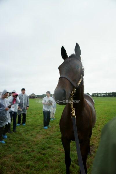 [出資検討] キャロット2018年度募集馬見学ツアー写真 ノーザンファームY11&12 (関東牝馬) 2