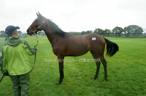 [出資検討] キャロット2018年度募集馬見学ツアー写真 ノーザンファームY11&12 (関東牝馬) 7