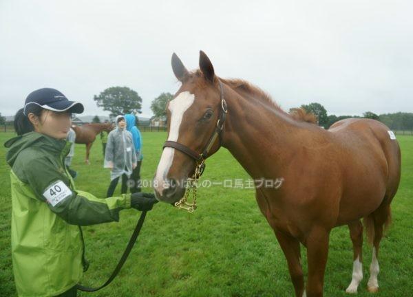 [出資検討] キャロット2018年度募集馬見学ツアー写真 ノーザンファームY11&12 (関東牝馬) 16