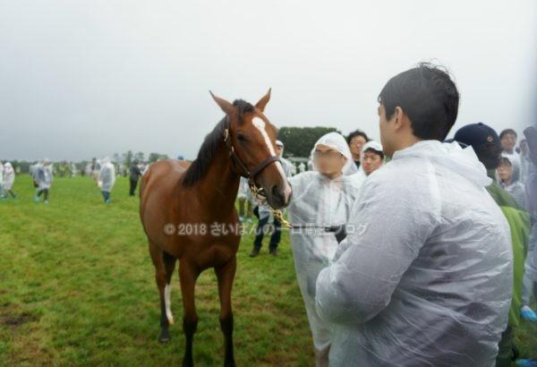 [出資検討] キャロット2018年度募集馬見学ツアー写真 ノーザンファームY11&12 (関西牝馬) 2
