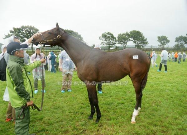 [出資検討] キャロット2018年度募集馬見学ツアー写真 ノーザンファームY11&12 (関西牝馬) 3