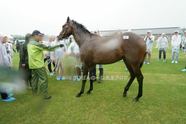[出資検討] キャロット2018年度募集馬見学ツアー写真 ノーザンファームY9&10 (牝馬) 4
