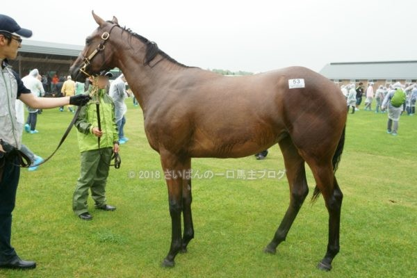 [出資検討] キャロット2018年度募集馬見学ツアー写真 ノーザンファームY9&10 (牝馬) 3