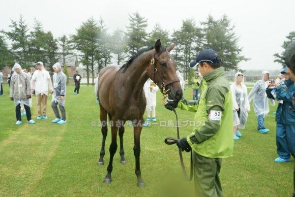 [出資検討] キャロット2018年度募集馬見学ツアー写真 ノーザンファームY9&10 (牝馬) 5