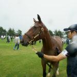 [出資検討] キャロット2018年度募集馬見学ツアー写真 ノーザンファームY9&10 (牝馬) 33