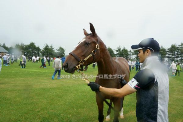 [出資検討] キャロット2018年度募集馬見学ツアー写真 ノーザンファームY9&10 (牝馬) 2