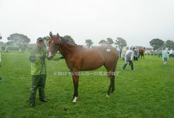 [出資検討] キャロット2018年度募集馬見学ツアー写真 ノーザンファームY11&12 (関西牝馬) 9