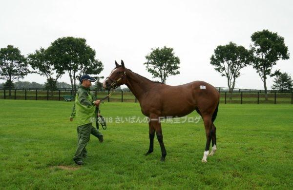 [出資検討] キャロット2018年度募集馬見学ツアー写真 ノーザンファームY11&12 (関西牝馬) 10