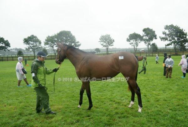 [出資検討] キャロット2018年度募集馬見学ツアー写真 ノーザンファームY11&12 (関西牝馬) 11