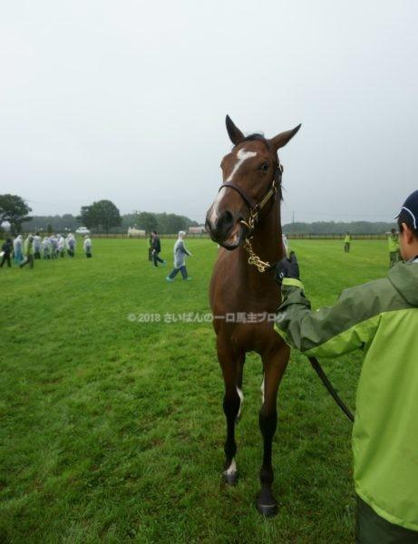[出資検討] キャロット2018年度募集馬見学ツアー写真 ノーザンファームY11&12 (関西牝馬) 12