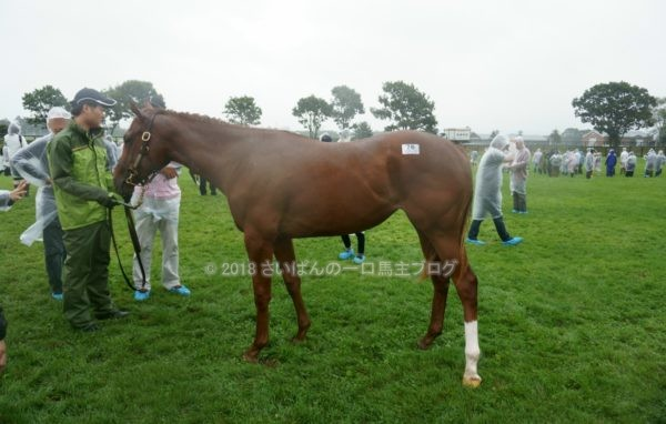 [出資検討] キャロット2018年度募集馬見学ツアー写真 ノーザンファームY11&12 (関西牝馬) 13
