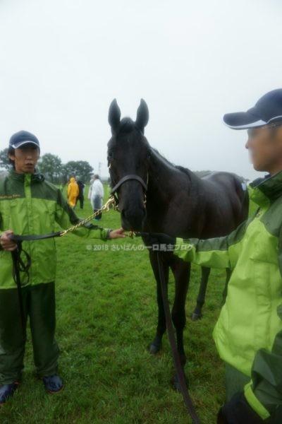 [出資検討] キャロット2018年度募集馬見学ツアー写真 ノーザンファームY11&12 (関西牝馬) 16