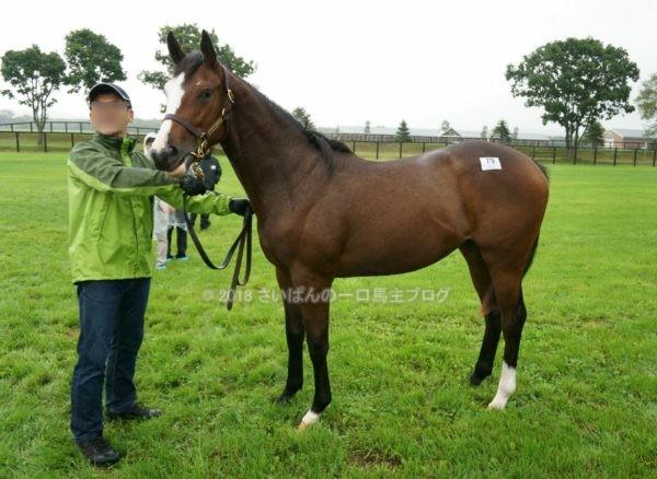 [出資検討] キャロット2018年度募集馬見学ツアー写真 ノーザンファームY11&12 (関西牝馬) 17