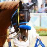 [アランブレラ] 4歳4月 内回りも2回目、9日の大井競馬(C1五六・ダ1600m)に御神本騎手で出走 59