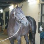 [ヴァイトブリック] 3歳4月 園田競馬(兵庫CS・ダ1870m)に登録し、選出されました 24