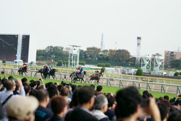 [競馬観戦] オジュウチョウサン目当てに4週連続の東京競馬場へ@18年11月 3