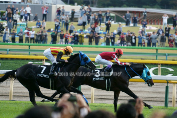 [競馬観戦] オジュウチョウサン目当てに4週連続の東京競馬場へ@18年11月 6