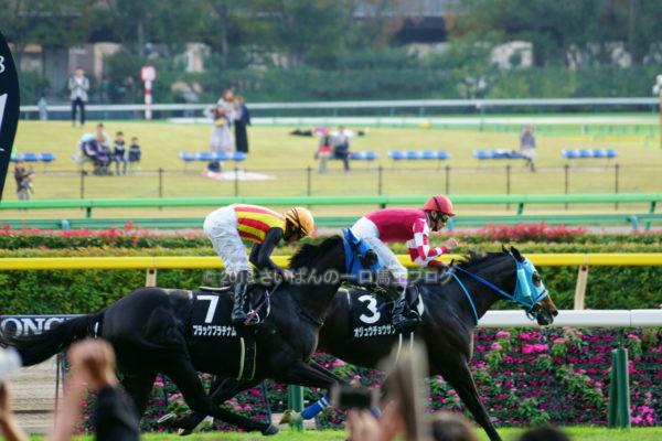 [競馬観戦] オジュウチョウサン目当てに4週連続の東京競馬場へ@18年11月 7