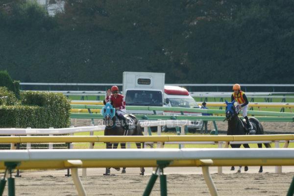 [競馬観戦] オジュウチョウサン目当てに4週連続の東京競馬場へ@18年11月 8